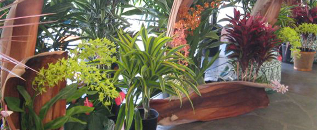 Interiorscape Plants
